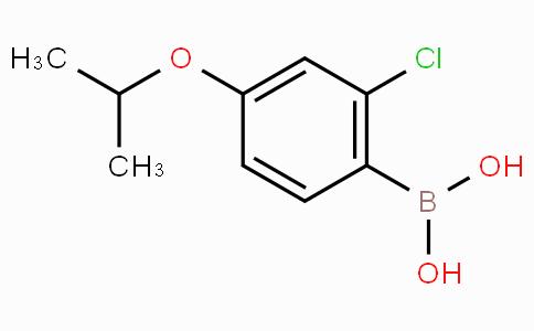 2-氯-4-异丙基苯硼酸
