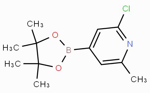 2-Chloro-6-methylpyridine-4-boronicacidpinacolester