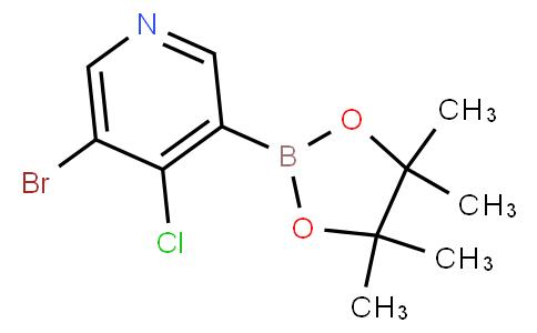 5-Bromo-4-chloropyridine-3-boronic acid pinacol ester