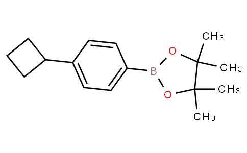 (4-Cyclobutylphenyl)boronic acid pinacol ester